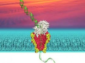 Nanopor tekniği uzun DNA zincirlerini hızlıca deşifre ediyor