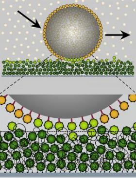 Nano boyuttaki cırt cırt, molekül taşımak için kullanılıyor