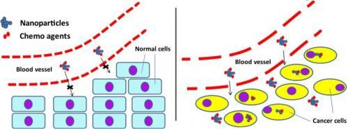 Kısa nanotüpler pankreas kanserini hedefliyor