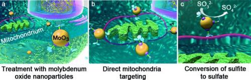 Bir yapay enzim, karaciğer hücrelerindeki doğal detoksifikasyon mekanizmasını taklit ediyor