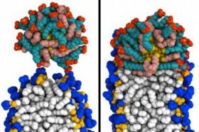 Nano boyutlu altın partiküller ilaç taşınması için iyi birer aday