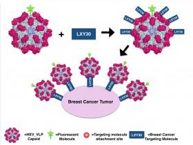 Hepatit Virüsü Benzeri Partiküller Kanser Tedavisinde Umut Olabilir