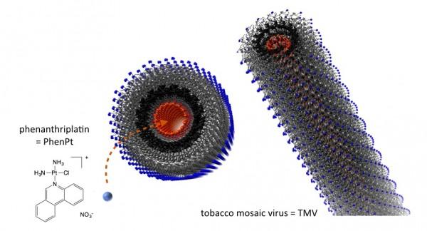 Nanopartiküle Sahip Bitki Virüsü İlaç Adayını Taşıdığı Zaman Tümörü Küçültüyor