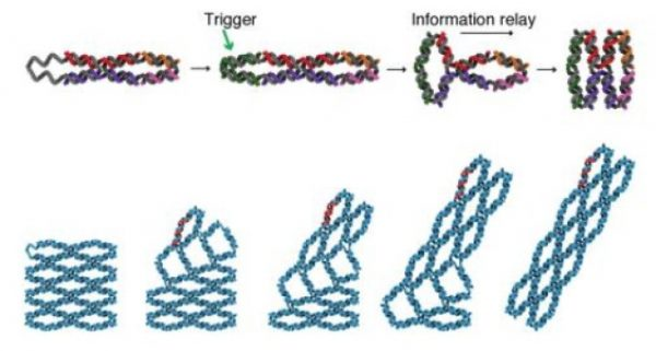 Değiştirilebilir DNA Mini Makineleri Bilgi Depoluyor