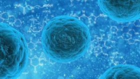 Biyoteknoloji Hedefli Olarak Nano Ölçekli Fabrikalardaki Kaynakları Kullanmanın Yeni Bir Yolu